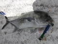 gt_fishing_maniac_popping_lures_tahiti