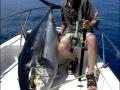 maniac_pencil_neck_yellow_fin_tuna_fishing_panama